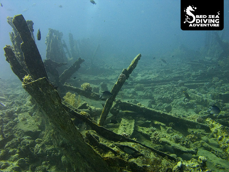 The remains of a wreck filled with marine life at small Gubal Island, known as The Barge.